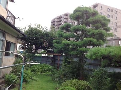 庭木剪定_c0186441_18571544.jpg