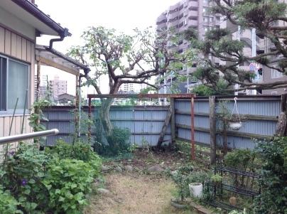 庭木剪定_c0186441_18574265.jpg