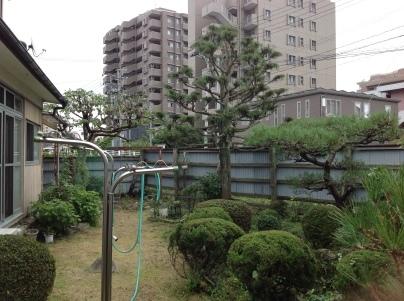 庭木剪定_c0186441_18582812.jpg
