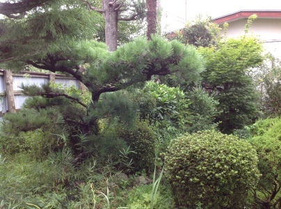庭木剪定_c0186441_18595546.jpg