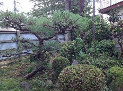 庭木剪定_c0186441_19001348.jpg