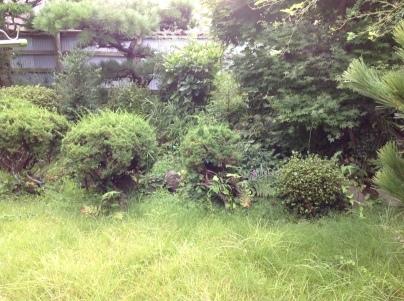 庭木剪定_c0186441_19004930.jpg