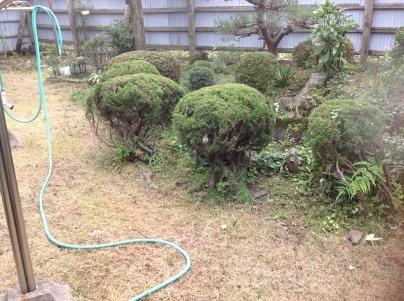 庭木剪定_c0186441_19041836.jpg