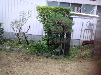 庭木剪定_c0186441_19050451.jpg