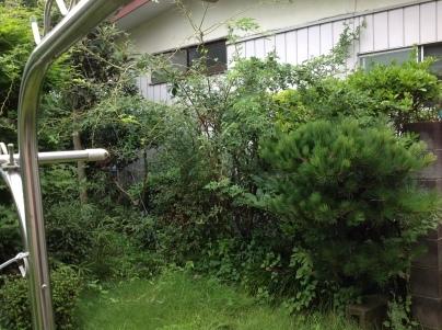 庭木剪定_c0186441_19052932.jpg