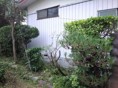 庭木剪定_c0186441_19062026.jpg