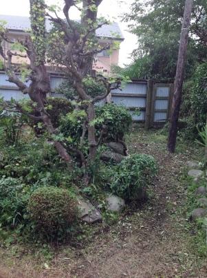 庭木剪定_c0186441_19063941.jpg