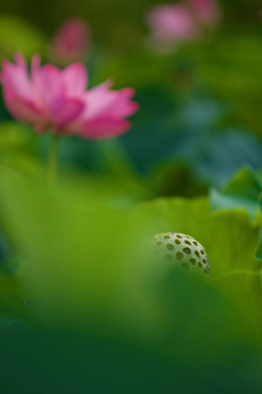 花より果托・・・その2_e0071967_1057839.jpg