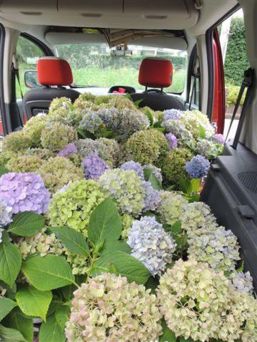 どげんかしたい!!・・・こんなに素晴らしい花あるのですから‼_b0137969_17235566.jpg