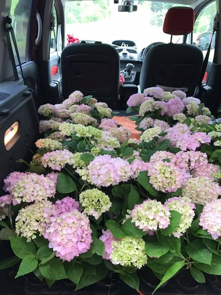 どげんかしたい!!・・・こんなに素晴らしい花あるのですから‼_b0137969_17272403.jpg