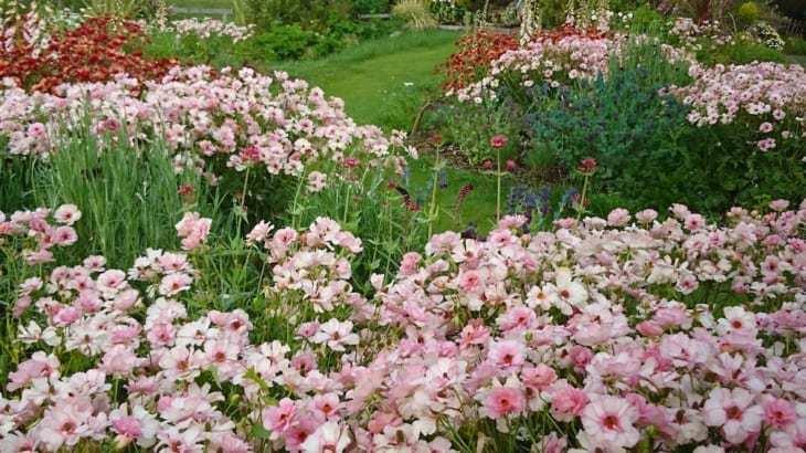 どげんかしたい!!・・・こんなに素晴らしい花あるのですから‼_b0137969_19065845.jpg