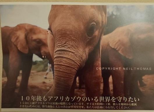 わたしと動物園_e0272869_10331873.jpg