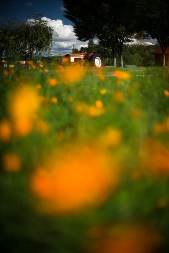 A Season Of Yellow And Orange Standing By_d0353489_19270313.jpg