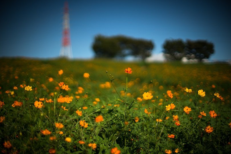 A Season Of Yellow And Orange Standing By_d0353489_19272464.jpg