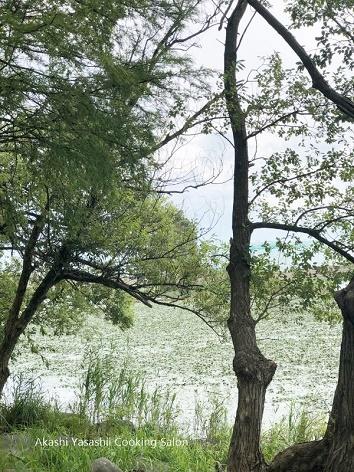 秋を感じる水辺の休日_f0361692_17171319.jpg