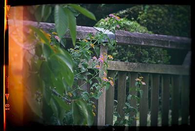 くまもと梅雨時と夏の花々2018(2)_b0133911_18504706.jpg