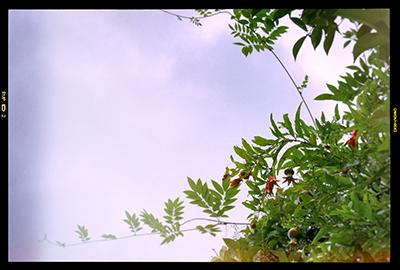 くまもと梅雨時と夏の花々2018(2)_b0133911_18504972.jpg