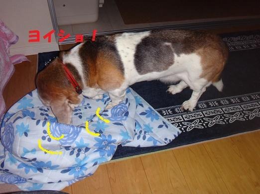 ベッド作戦その後・・・(^^;)_f0121712_07521743.jpg