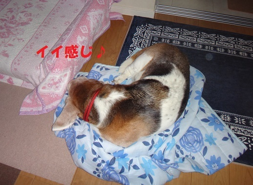 ベッド作戦その後・・・(^^;)_f0121712_07553672.jpg