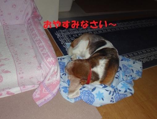 ベッド作戦その後・・・(^^;)_f0121712_07572659.jpg