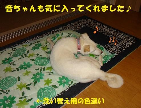 ベッド作戦その後・・・(^^;)_f0121712_08311800.jpg