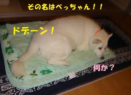 ベッド作戦その後・・・(^^;)_f0121712_08390832.jpg