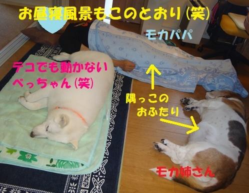 ベッド作戦その後・・・(^^;)_f0121712_08443699.jpg