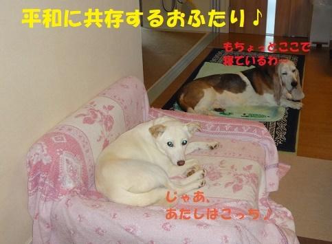 ベッド作戦その後・・・(^^;)_f0121712_08495486.jpg
