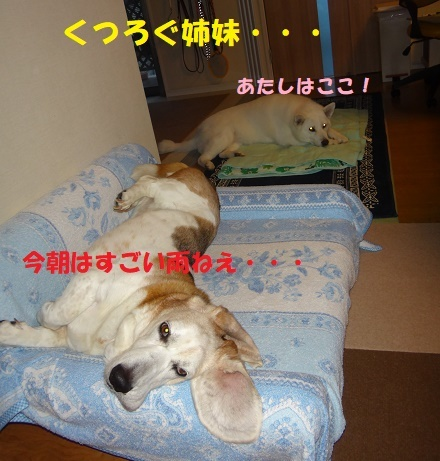 ベッド作戦その後・・・(^^;)_f0121712_08590531.jpg