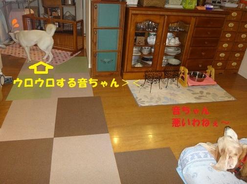 ベッド作戦その後・・・(^^;)_f0121712_09012737.jpg