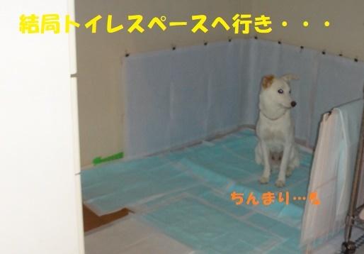 ベッド作戦その後・・・(^^;)_f0121712_09051987.jpg