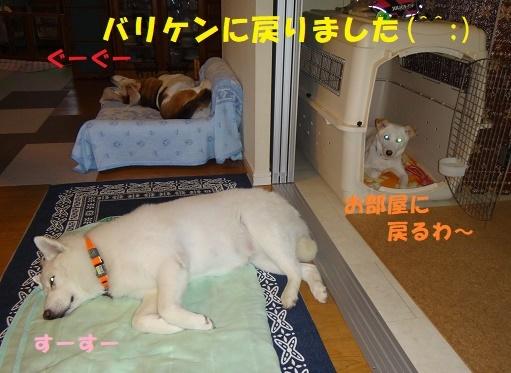 ベッド作戦その後・・・(^^;)_f0121712_09083495.jpg