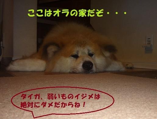 ベッド作戦その後・・・(^^;)_f0121712_09161362.jpg