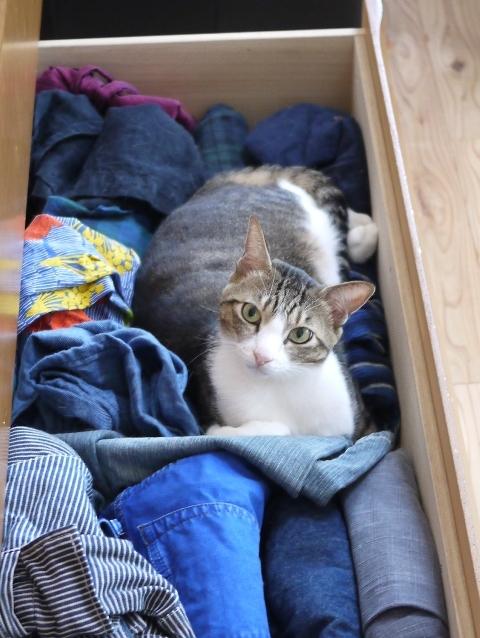 猫のお留守番 たんたんくんみーたんちゃん編。_a0143140_19020501.jpg