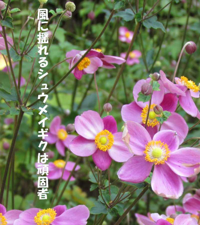 f0117041_06063490.jpg