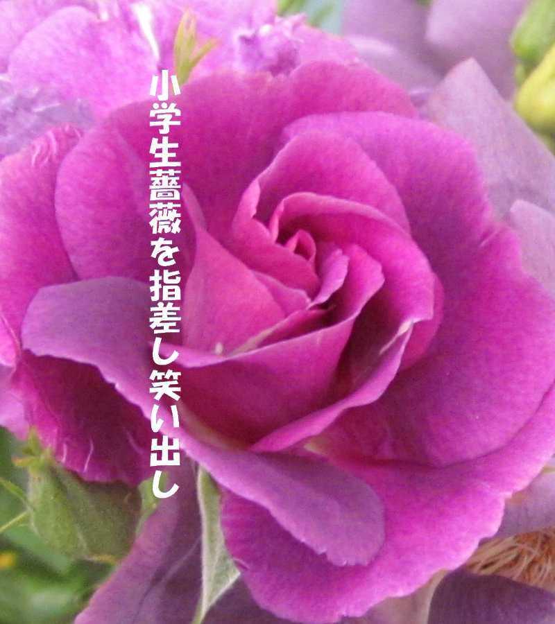 f0117041_06201045.jpg