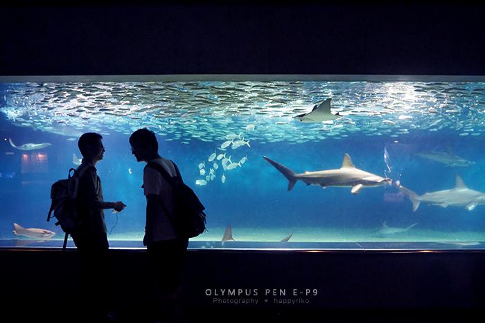 葛西臨海公園・水族館_b0049843_16311128.jpg