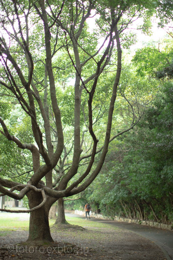 樹はなんでも知っている_c0268775_12435300.jpg