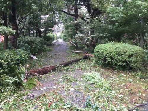 台風21号_d0141987_16490154.jpeg