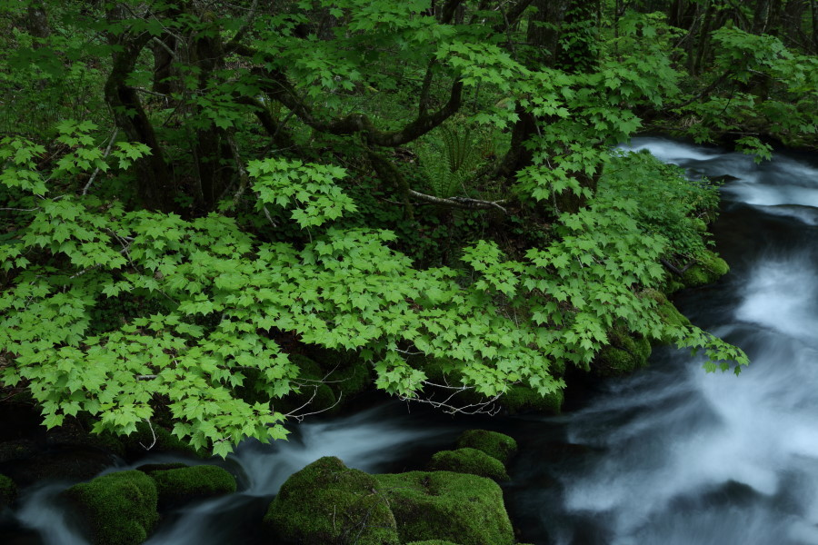 深緑の瀬_b0178102_05501352.jpg