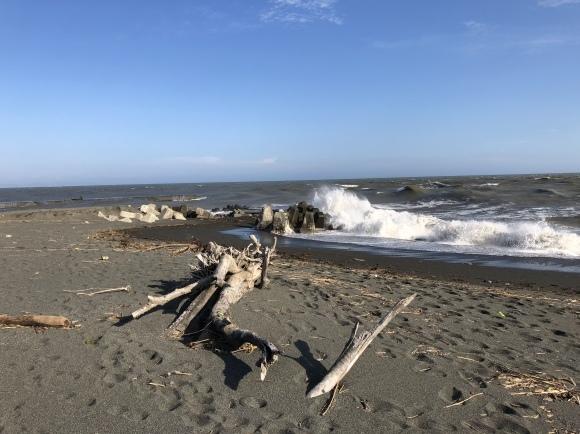 台風21号余波で荒れる河口のメダイチドリ   HTS_d0346713_22543398.jpeg