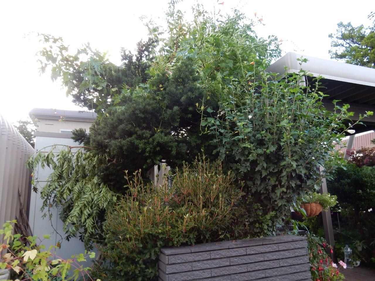 午後遅くなってからようやく「台風一過」の雰囲気に_c0025115_22551592.jpg