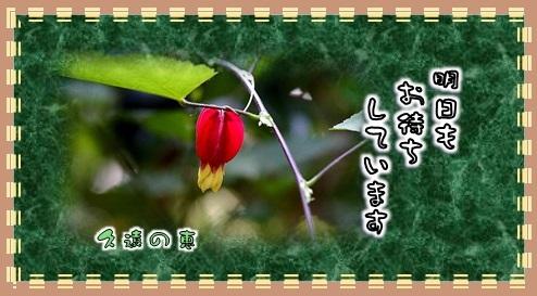 f0214467_10454332.jpg