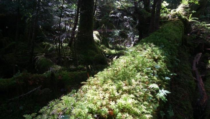 八ヶ岳リトリートハウスFlanのキセキ_e0231387_21222807.jpg