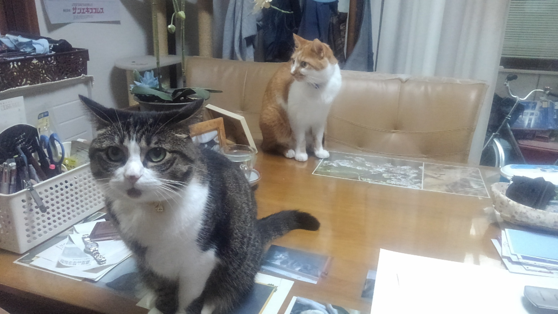 【猫】微妙な距離_f0141609_17034140.jpg
