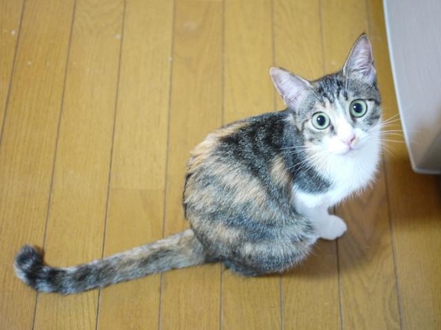 猫のお留守番 月ちゃん編。_a0143140_23202667.jpg