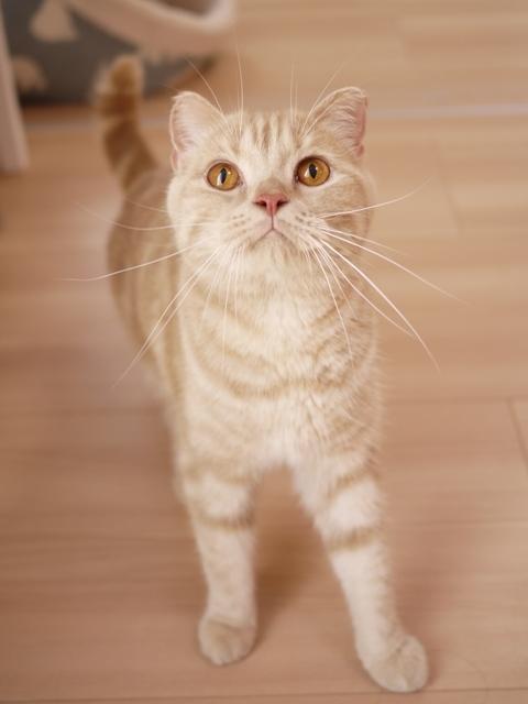 猫のお留守番 ビスコくん編。_a0143140_23270013.jpg