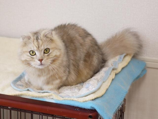 猫のお留守番 パピコくん編。_a0143140_23285581.jpg