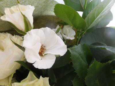 オークリーフ(秋バラの花束)_f0049672_14582604.jpg