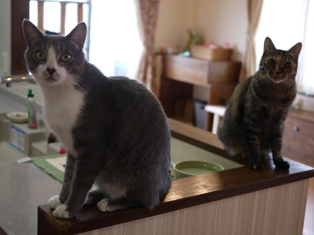 猫のお留守番 天ちゃん麦くん茶くん編。_a0143140_22494708.jpg